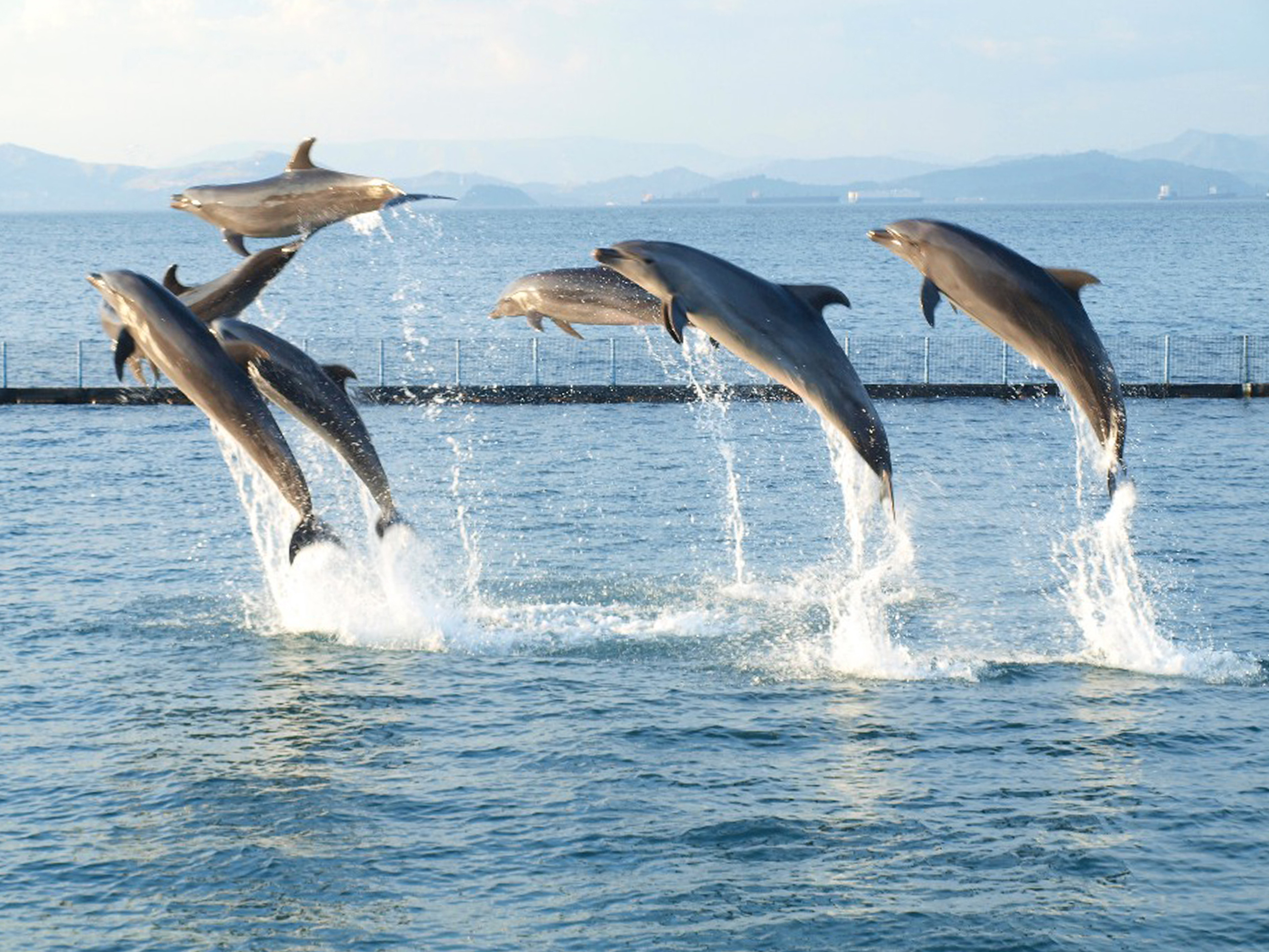Displaying 18> Images For - Dolphin Puns...